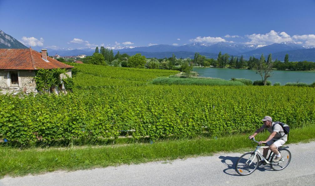 Image Le lac d'annecy et le massif des bauges à vélo