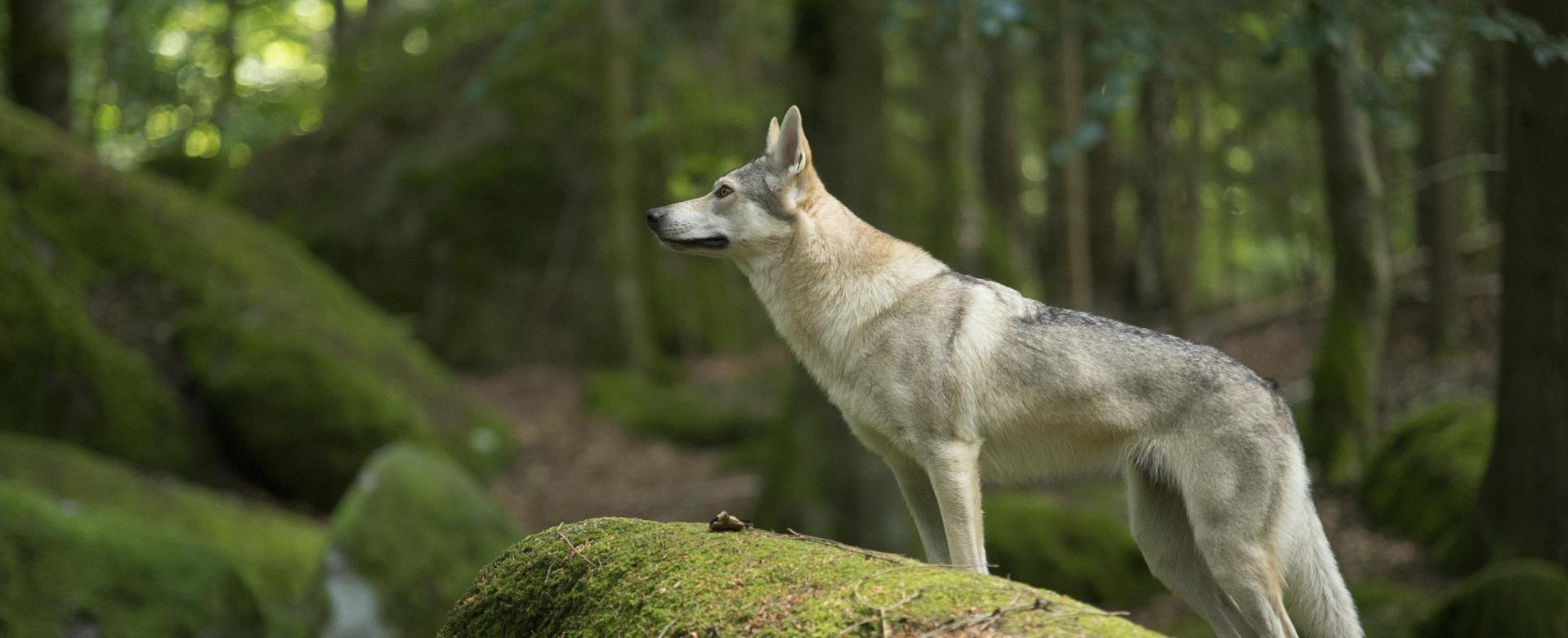 Voyage sur l'eau : Entre lacs et loups en mercantour