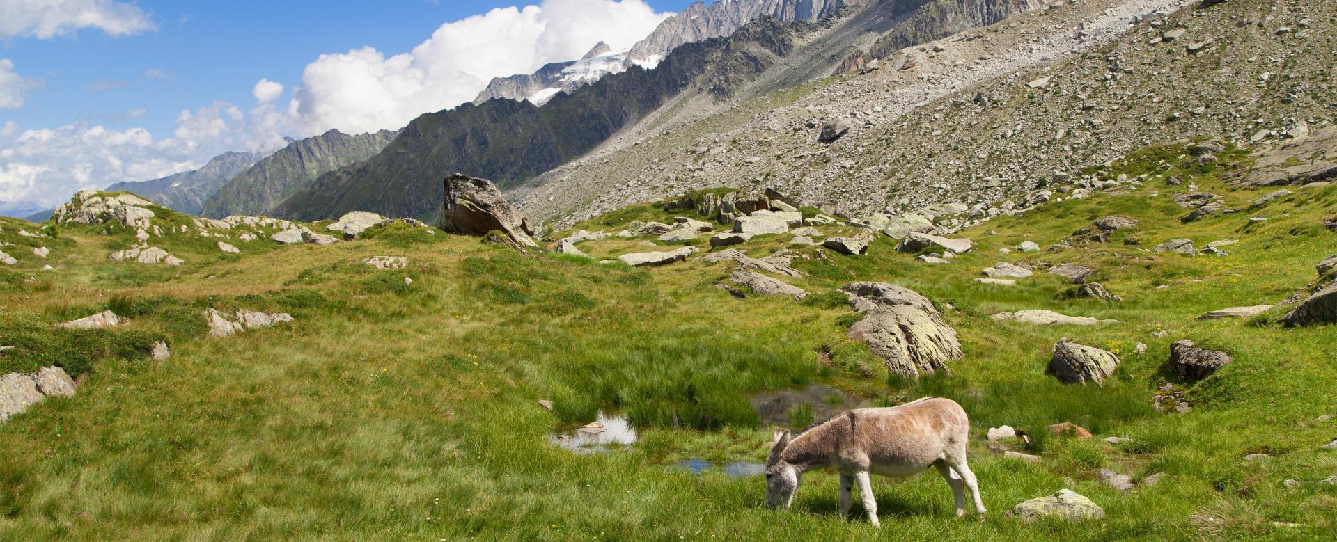 Voyage à pied : Hi-han au mont-blanc : première étape