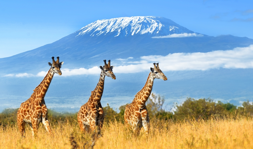 Image Du mont meru au kilimandjaro