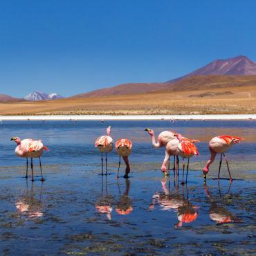 Sud-Lípez et Atacama (22 j)