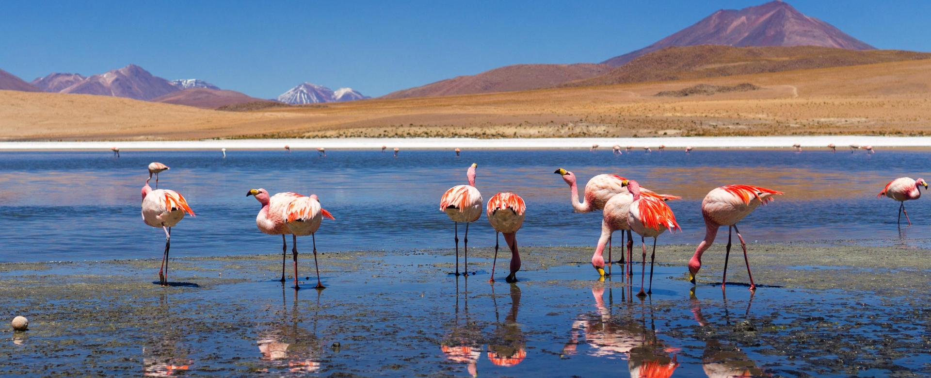 Trekking Bolivie : Sud-lípez et atacama (22 j)