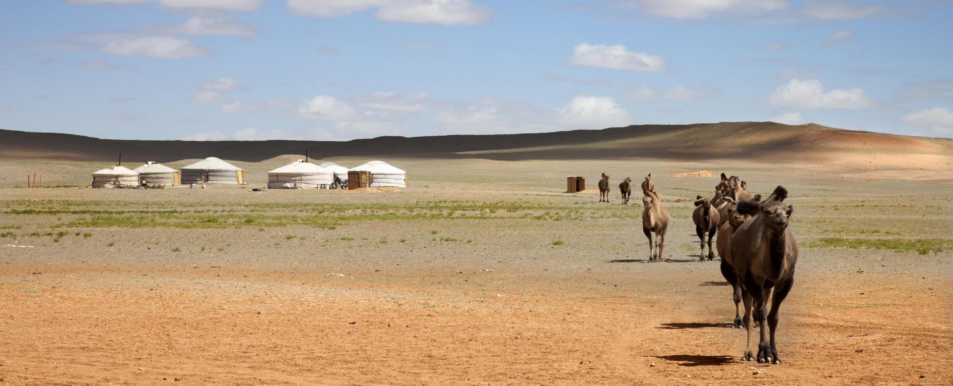 Voyage à pied : Nomades, steppes et désert de gobi