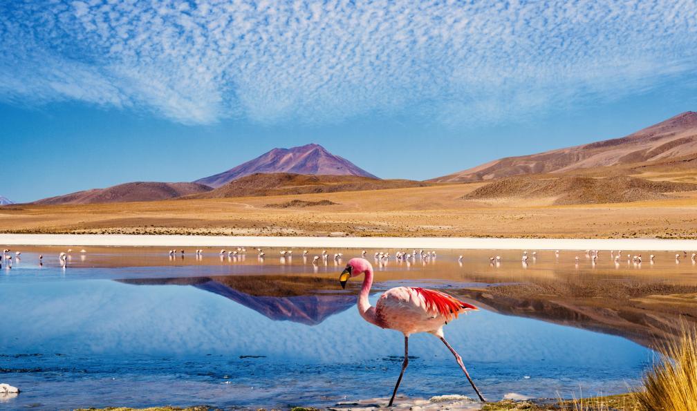 Image De lagune en salar