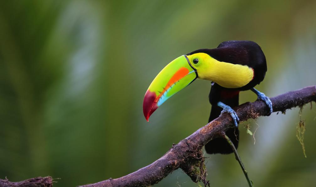 Image Le jardin du quetzal