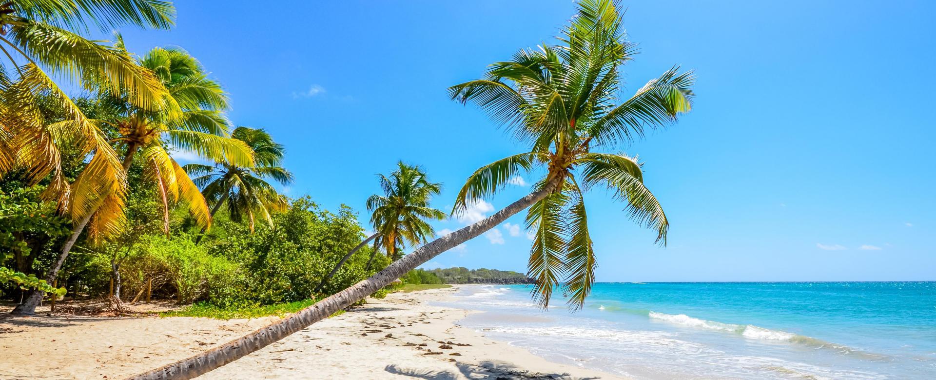 Voyage à pied : Martinique : Couleurs caraïbes