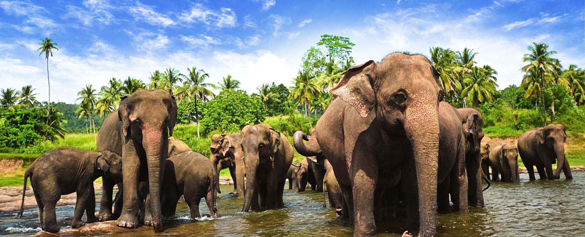 Voyage avec des animaux Sri Lanka : Les grands parcs du sud