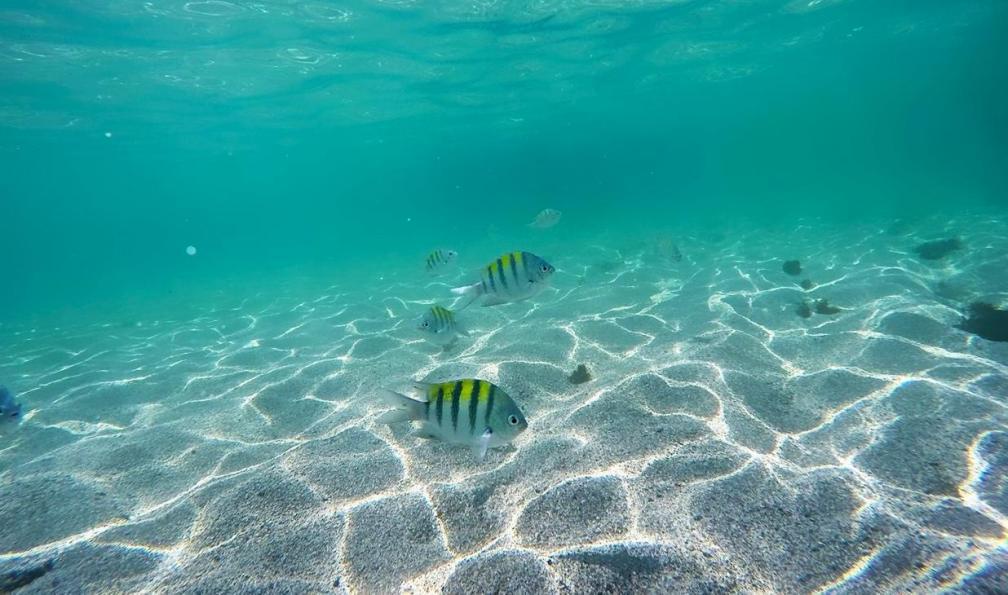 Image Rando et océan à bahia