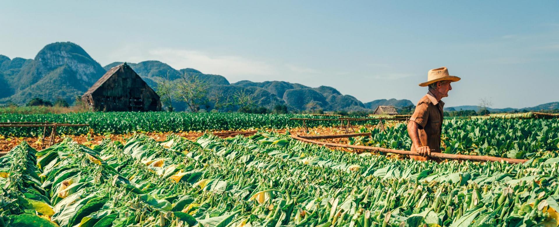 Voyage à pied Cuba : Rando au pays du che