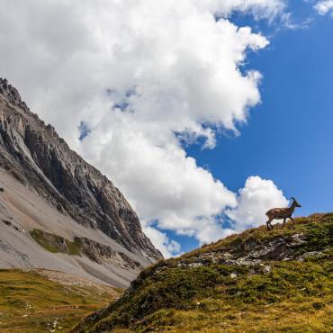 Le trail des glaciers de la Vanoise