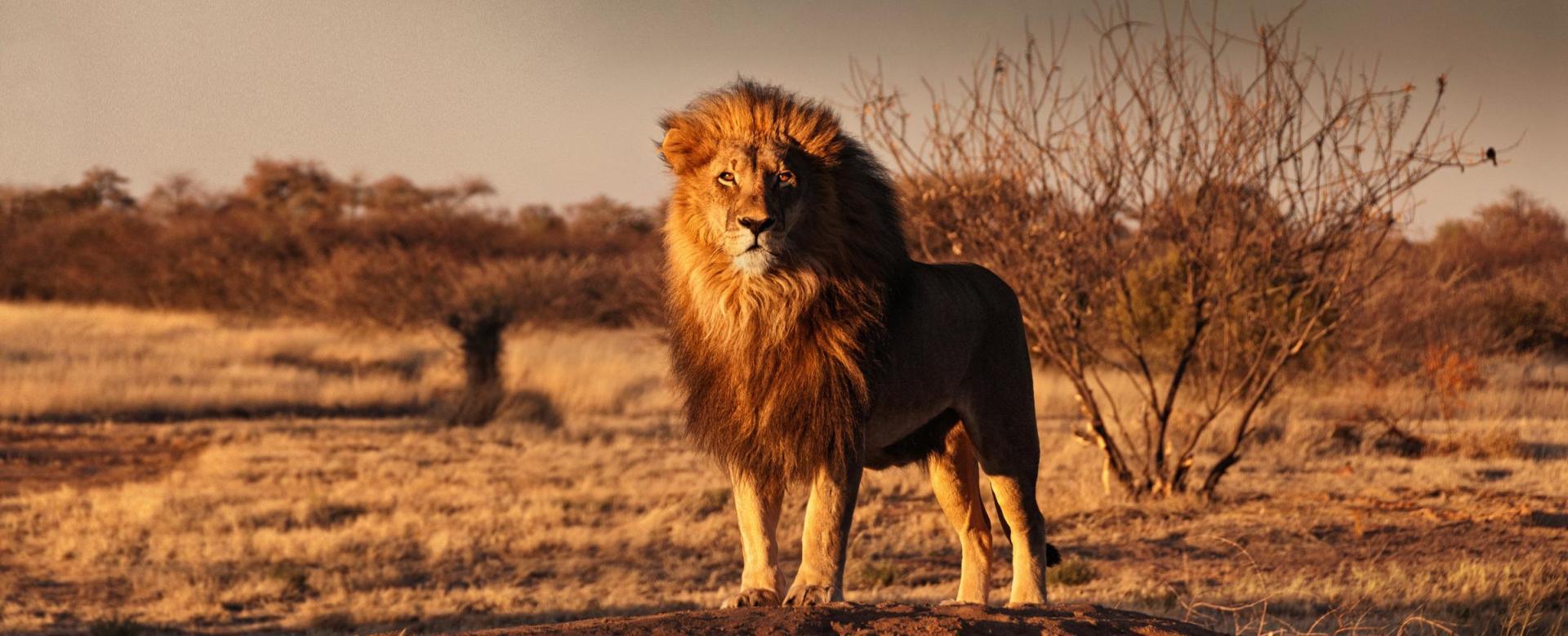 Voyage à pied Namibie : Le grand tour de namibie