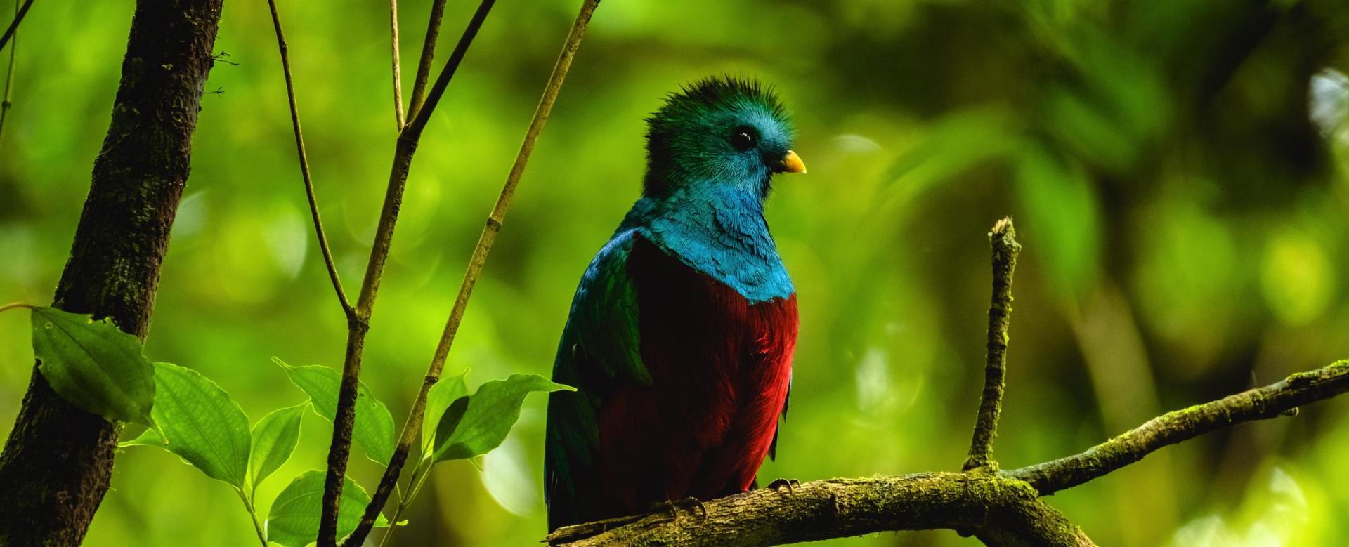 Voyage à pied Costa Rica : Le jardin du quetzal
