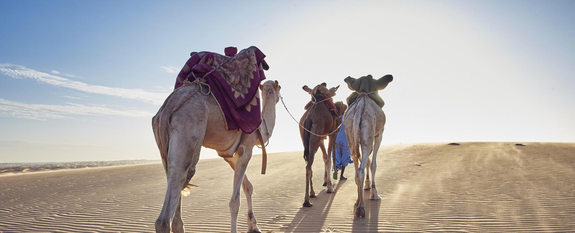 Voyage à pied : Des dunes de l\'amatlich à la vallée blanche