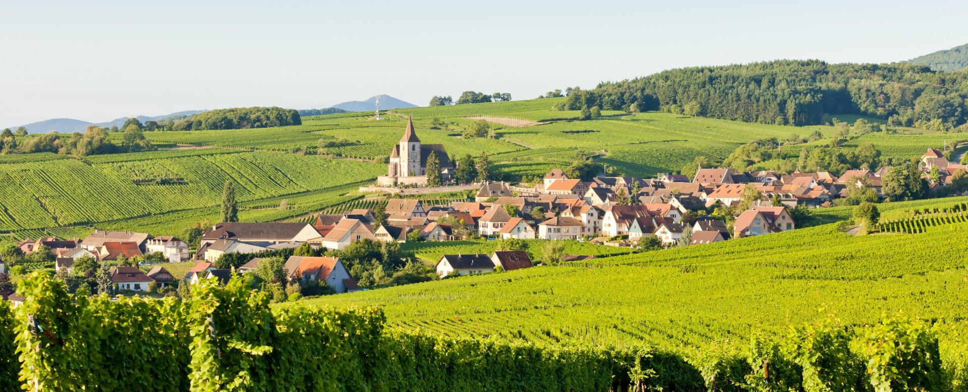Voyage à pied : Alsace : vins et châteaux