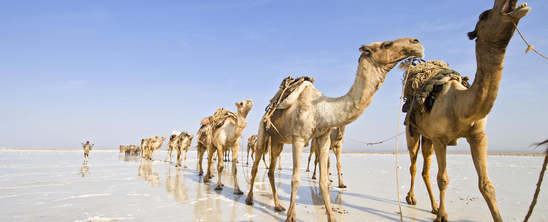 Voyage à pied : Volcans, route du sel, églises du tigré à lalibela