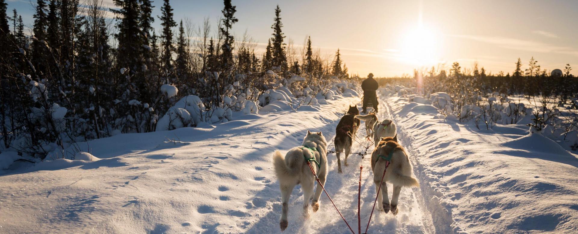 Voyage à la neige : L'attelage du grand nord