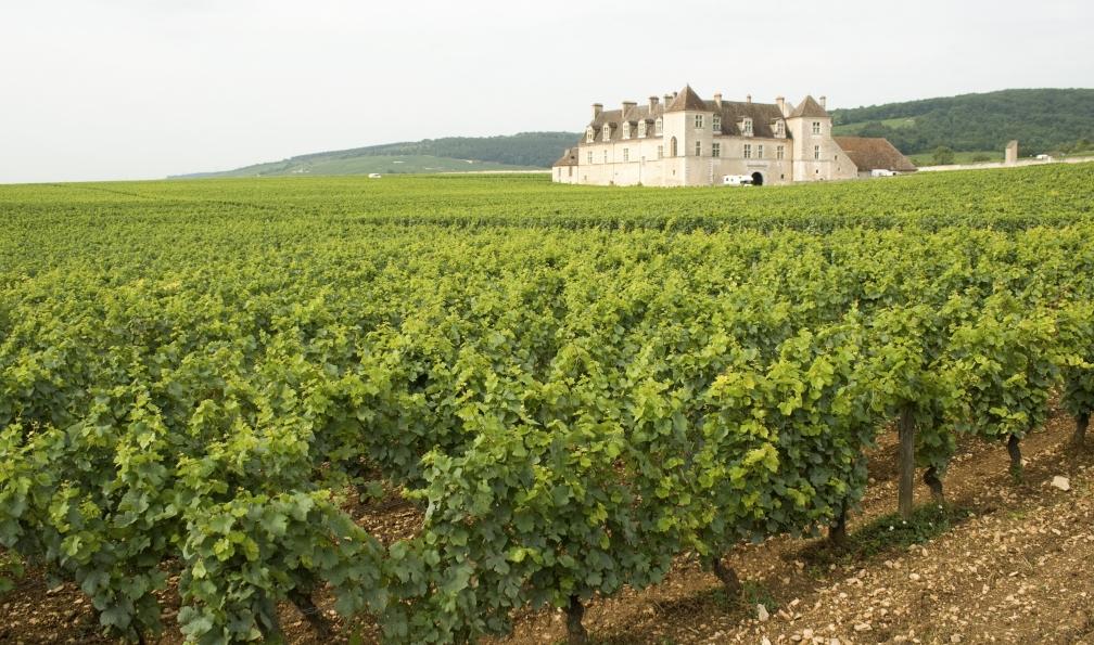 Image Les vignobles de bourgogne à vélo