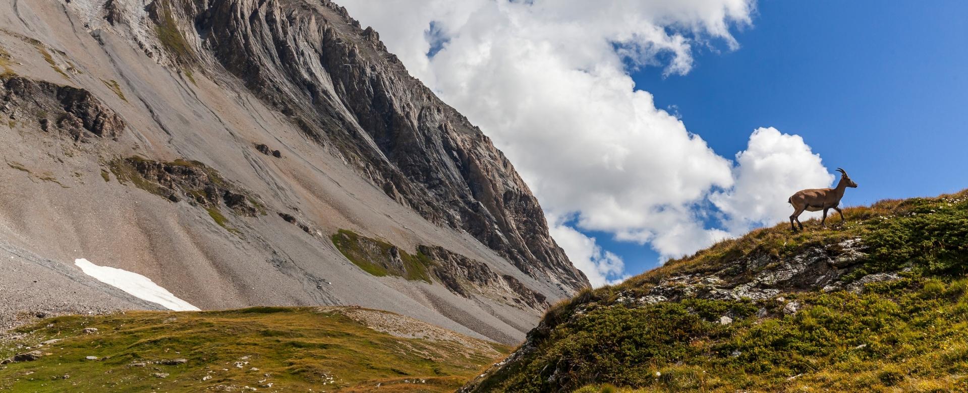 Voyage à pied : Le trail des glaciers de la vanoise