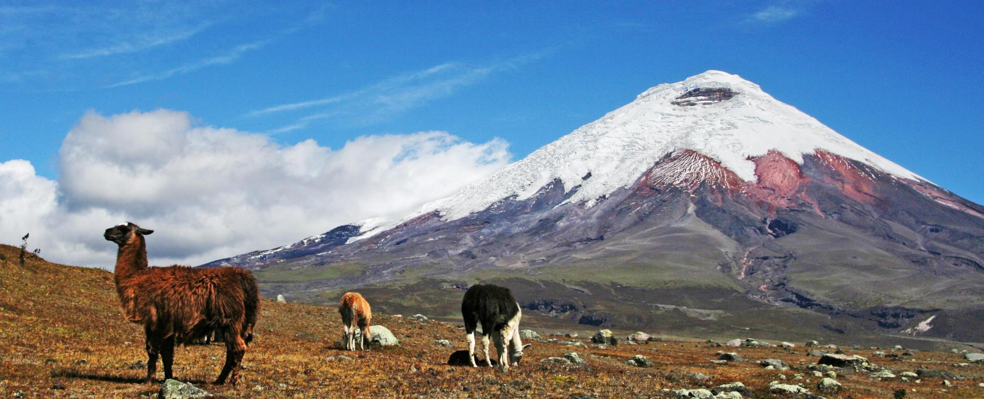 Voyage à pied Équateur : Au pied des géants