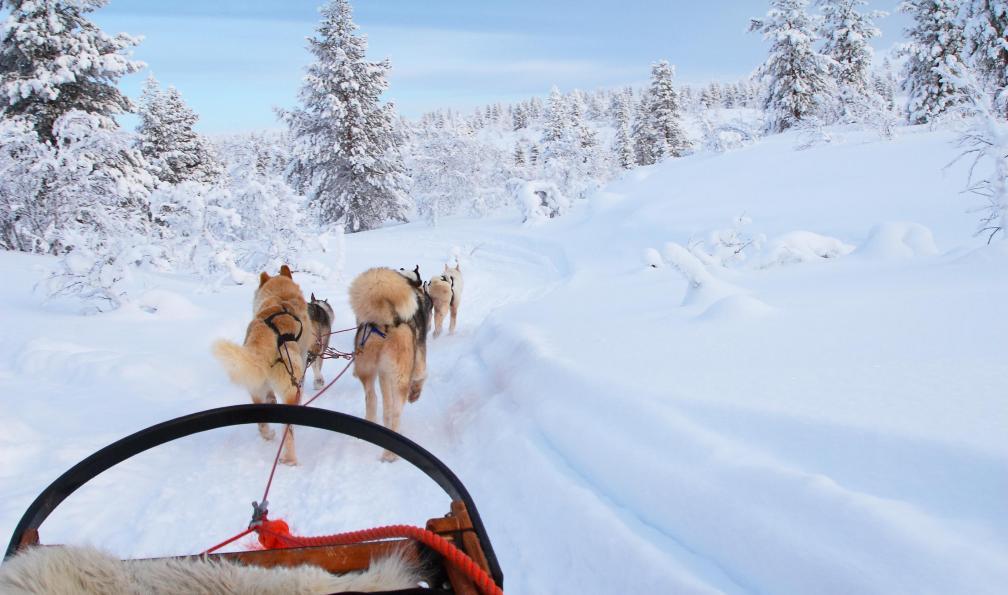 Image Québec : aventure en traîneau à chiens