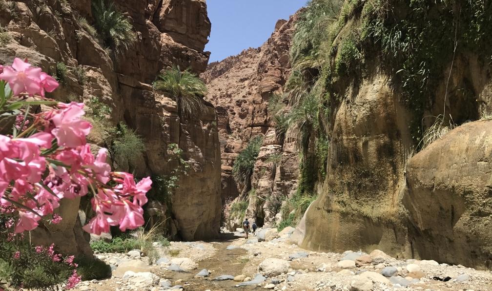 Image Canyons verdoyants, cité rose et voûte céleste