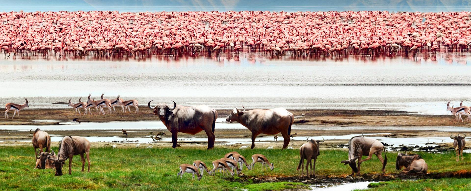 Voyage à pied Tanzanie : Faune de la savane et lagons de zanzibar
