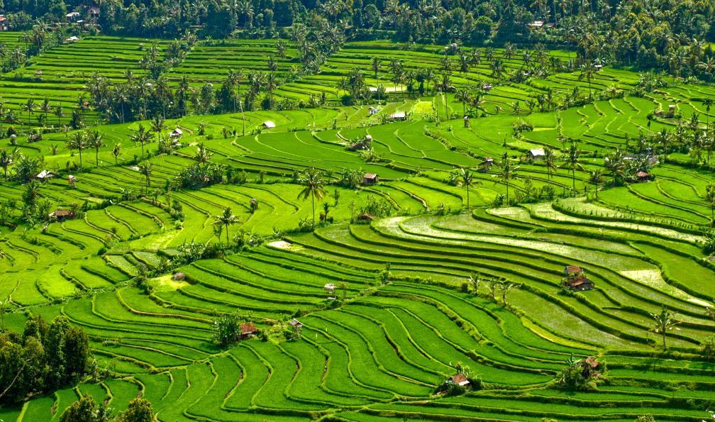 Image Bali-gili des petits