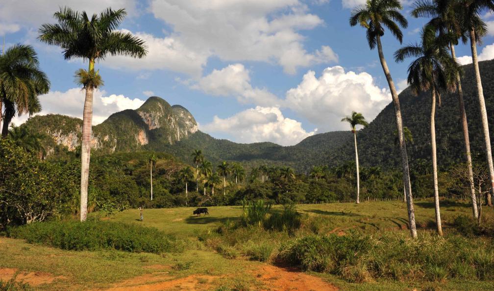 Image Sur l'île crocodile