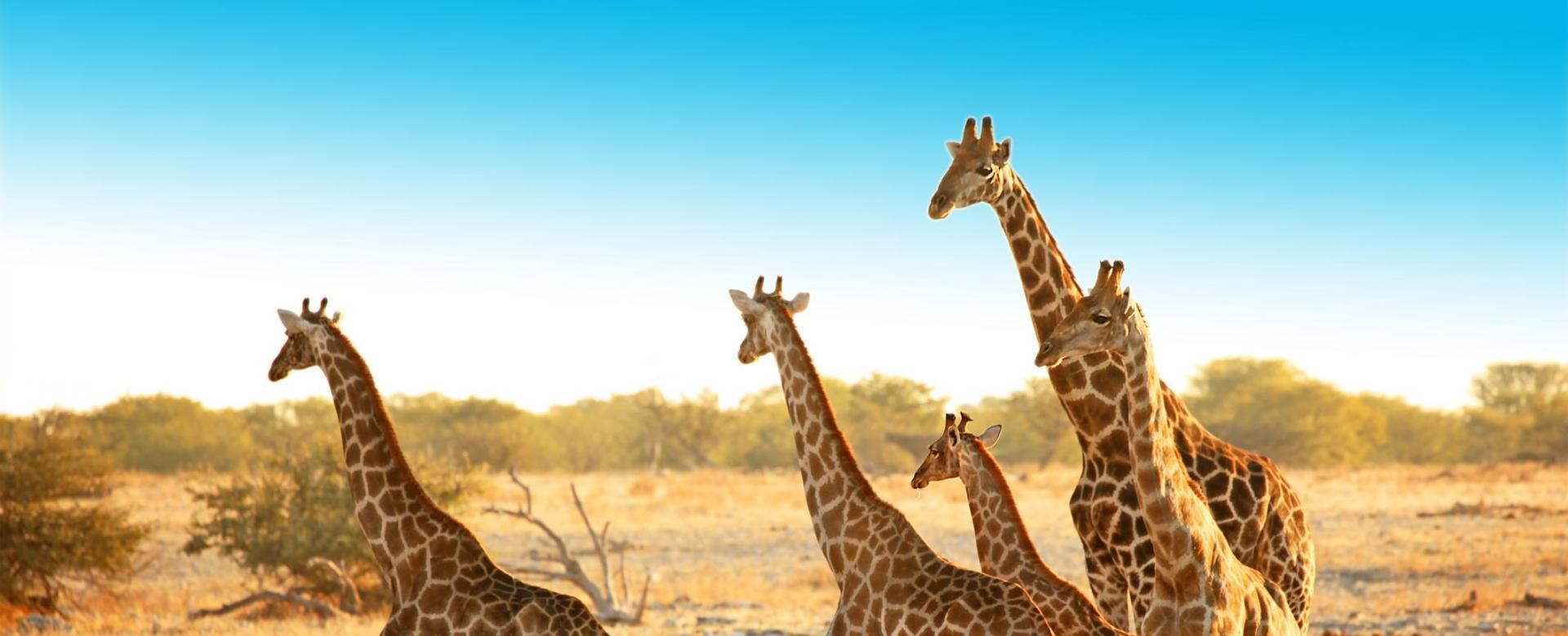 Voyage à pied : Safaris et l\'gendes de namibie (en lodge)