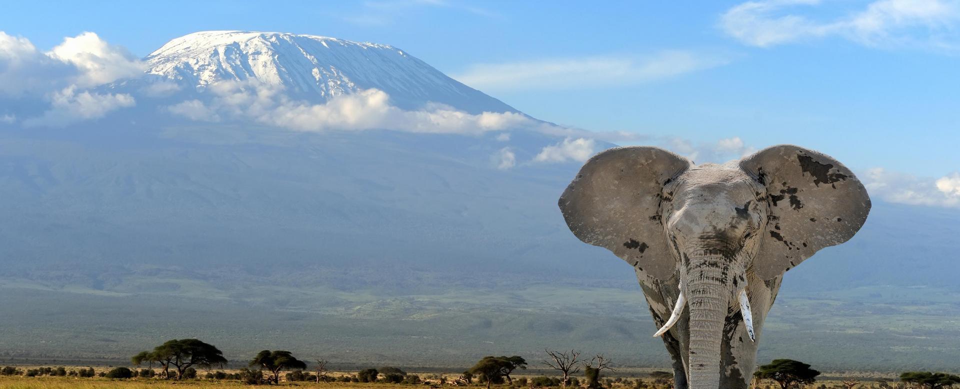 Voyage à pied : Kilimandjaro : voie machame et big five