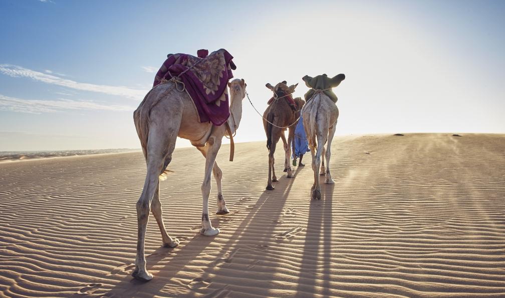 Image Kaléidoscope saharien