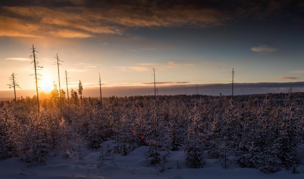 Image L'appel du nord