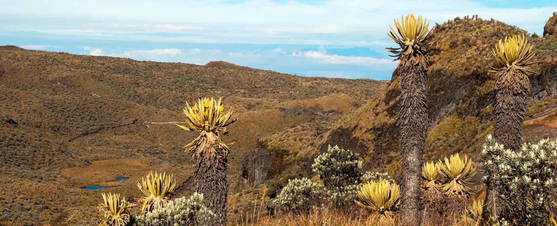 Voyage à pied : Páramo andin, d\'sert de la guajira et cité perdue