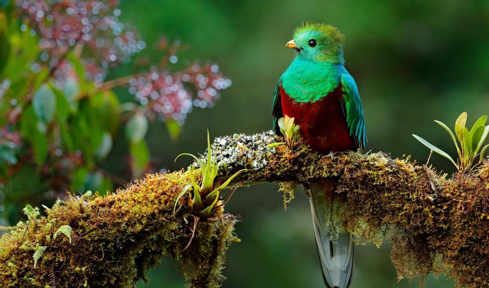 Image Des montagnes du quetzal au corcovado