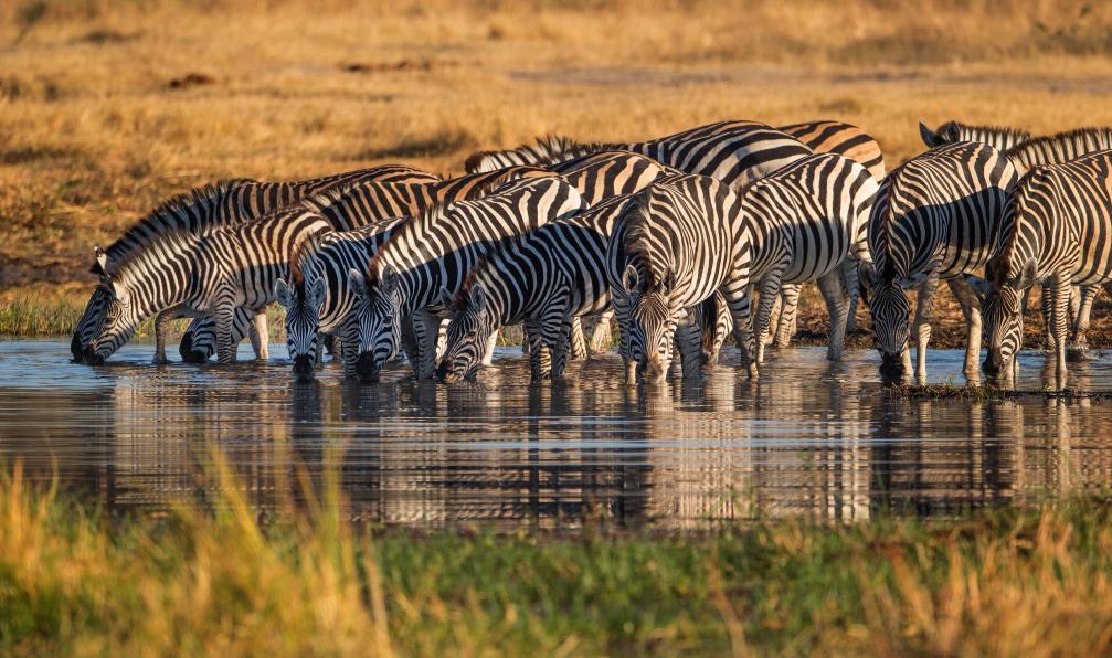 Image Rêve tanzanien entre savane et lagons