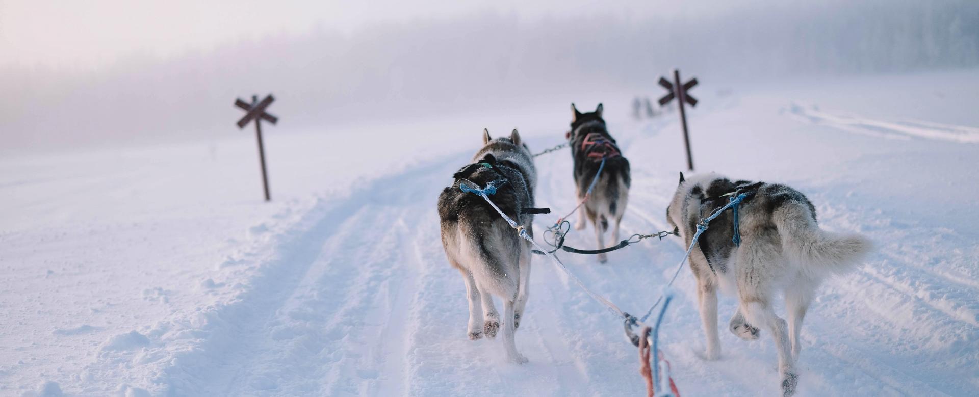 Voyage à la neige Suède : Expériences en forêt boréale
