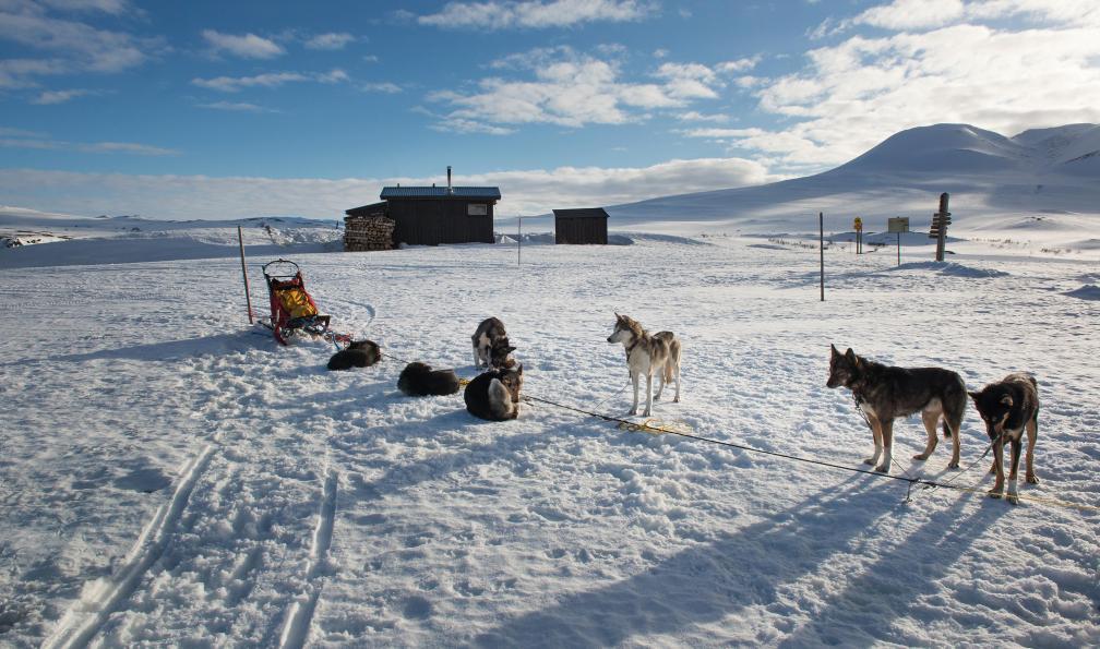 Image L'aventure en traîneau à chiens