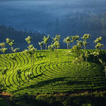 Kerala, la route des épices