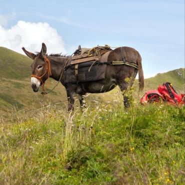 Le Queyras avec mon âne