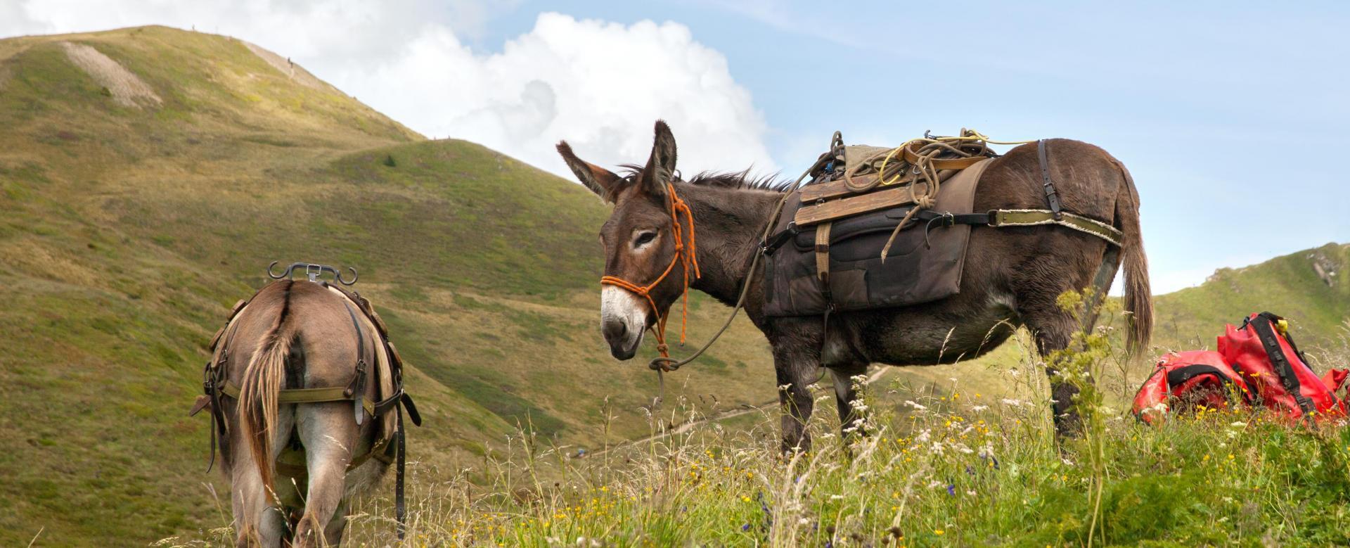 Voyage avec des animaux France : Le queyras avec mon âne