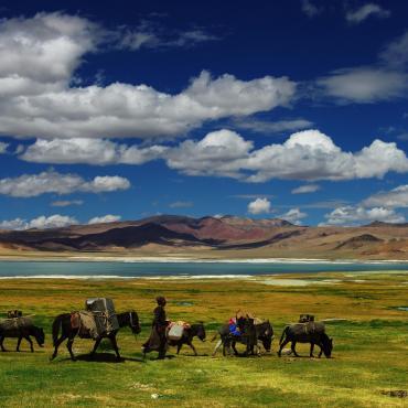 Grand trek ladakhi, de l'Indus au Tsomoriri