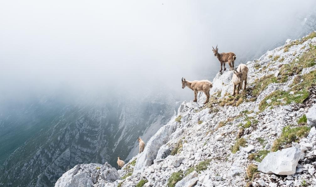 Image Aventuriers au pays du mont-blanc