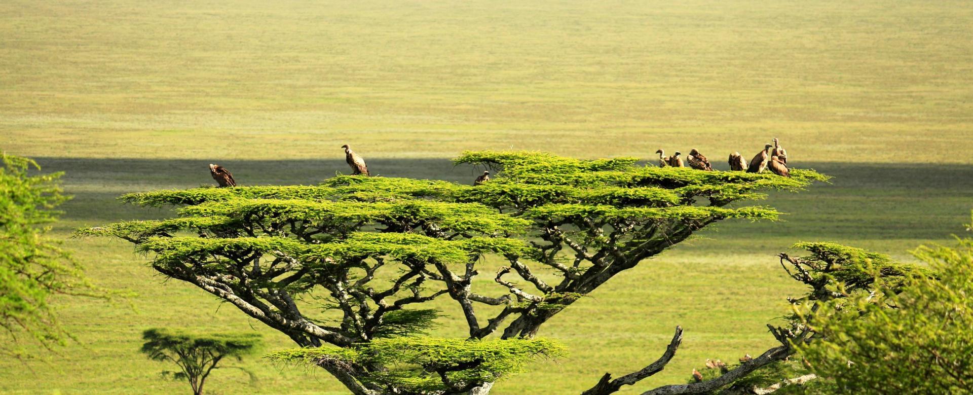 Voyage avec des animaux Tanzanie : Au coeur de la savane tanzanienne