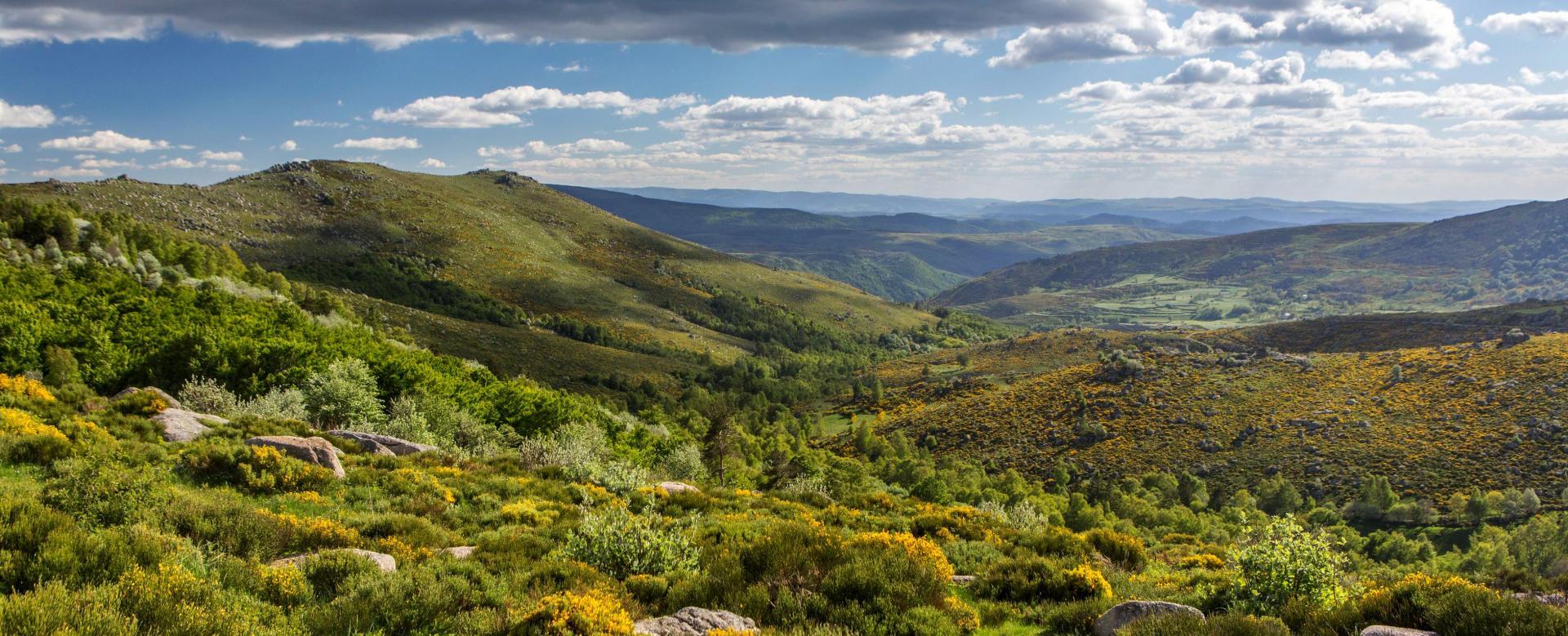 Voyage à pied France : Le trail de stevenson