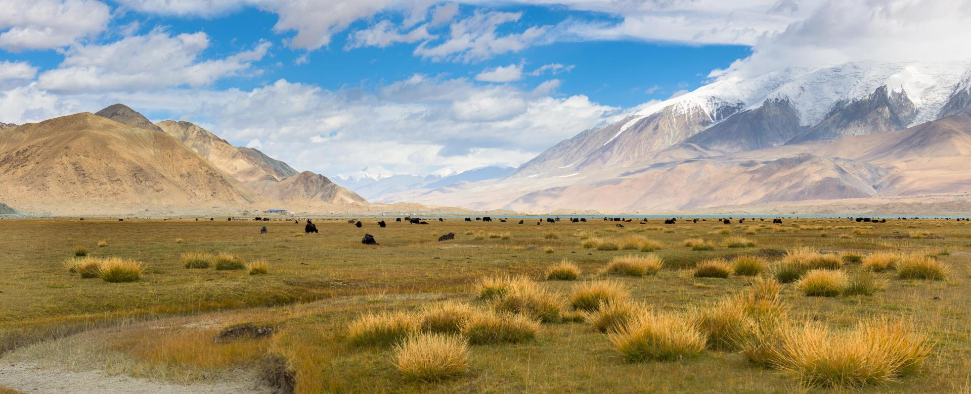 Voyage à pied : Aventure nomade sur la route de la soie