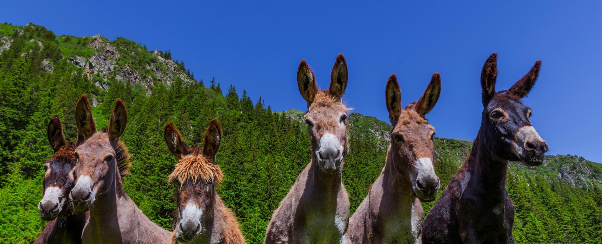 Voyage avec des animaux : Le tour des quatre-montagnes avec mon âne