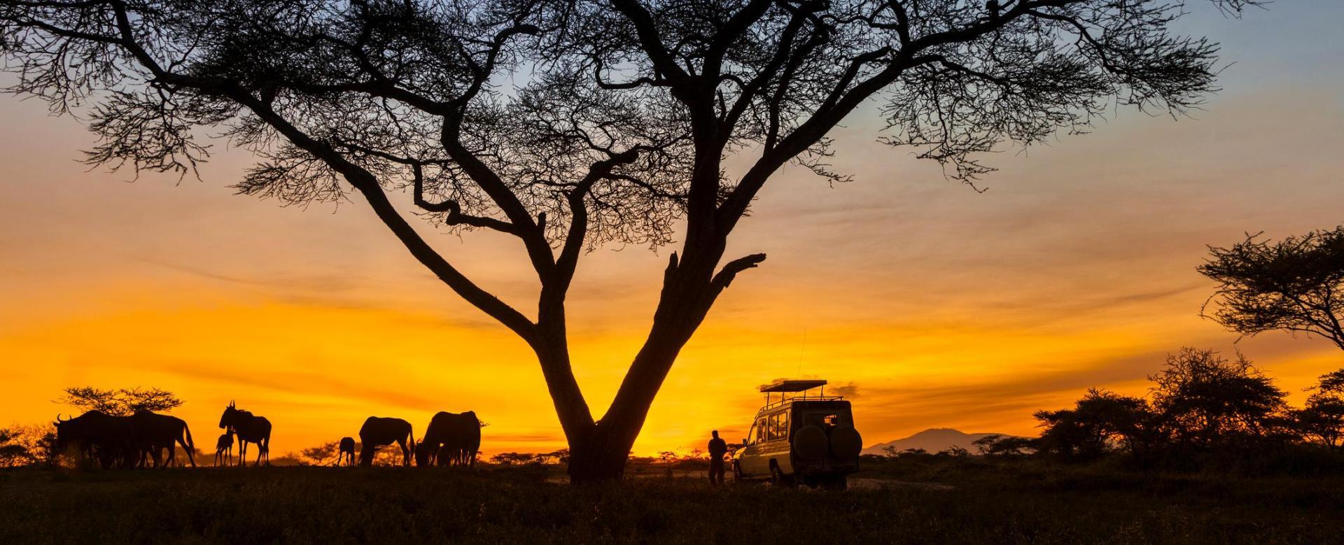 Voyage à pied : Safaris mythiques en lodges et lac natron
