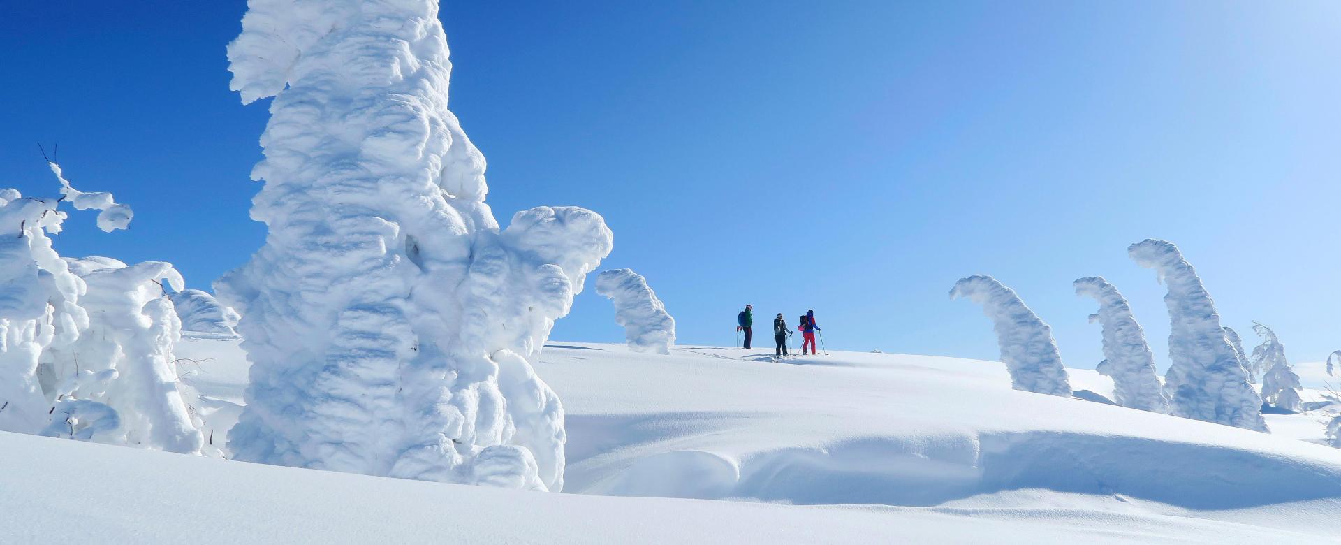 Voyage à pied : La poudreuse légendaire d'hokkaido