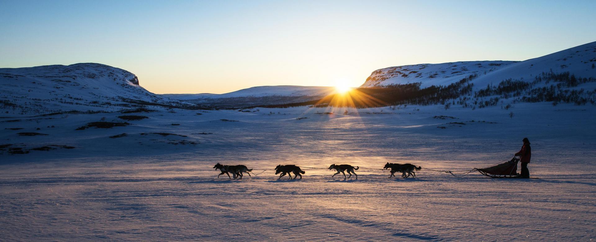 Voyage à pied : L\'aventure en traîneau à chiens