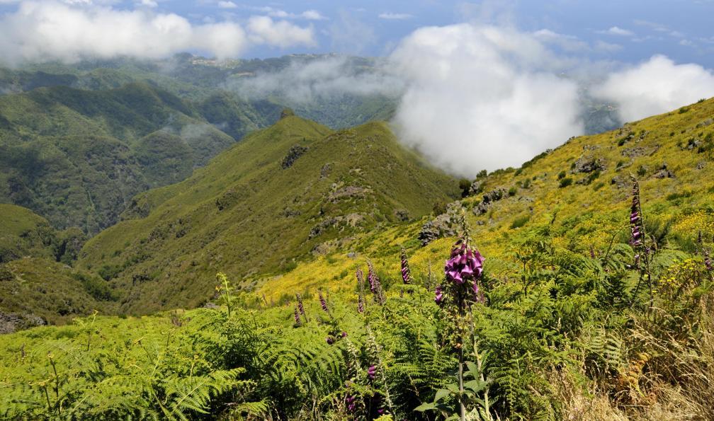 Image L'île aux fleurs